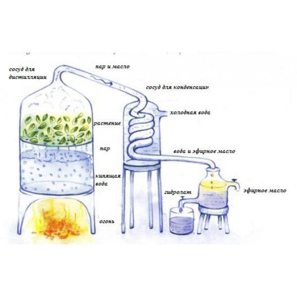Эфирное масло в домашних условиях приготовить